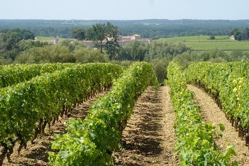 superficie vignoble