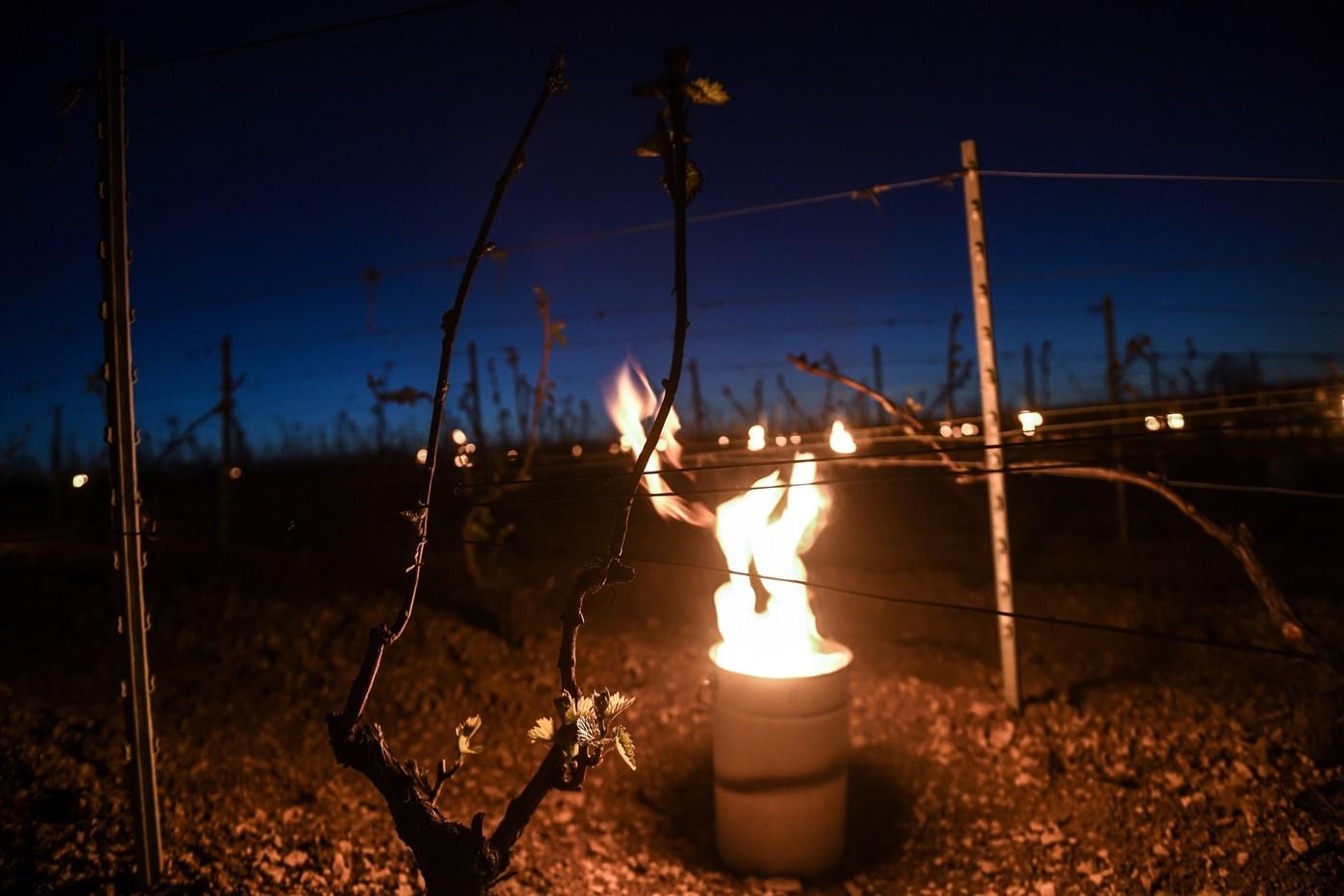 En bourgogne des feux de paille contre le gel dans les vignes en bourgogne des feux de - Comment proteger les arbres fruitiers du gel ...