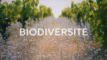 Trophées des Vignobles d'Occitanie : Engagement Agro-Environnemental & Sociétal